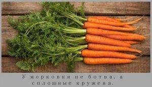 Чем морковь полезна для организма человека – польза и вред корнеплода
