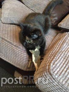 Удивительная история о кошке, которая приносила хозяину листья