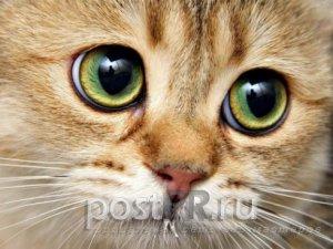 У кошки слезятся глаза - помощь в домашних условиях