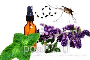 Как избавиться от комаров за несколько минут