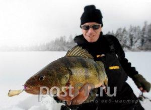 Зимняя ловля судака на блесну