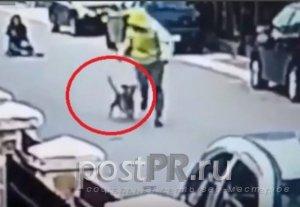 Грабитель собрался вырвать сумку у женщины, но её защитили